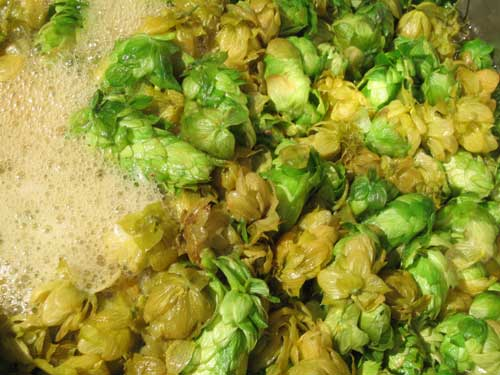 Fresh hops in the boil