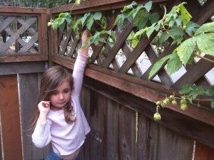 Ella picking hops
