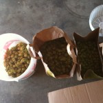 3 containers of fresh and dried hops